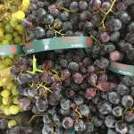 Coronation seedless grapes