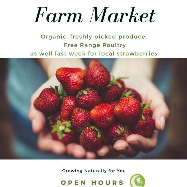 Moondance Farm Market Update